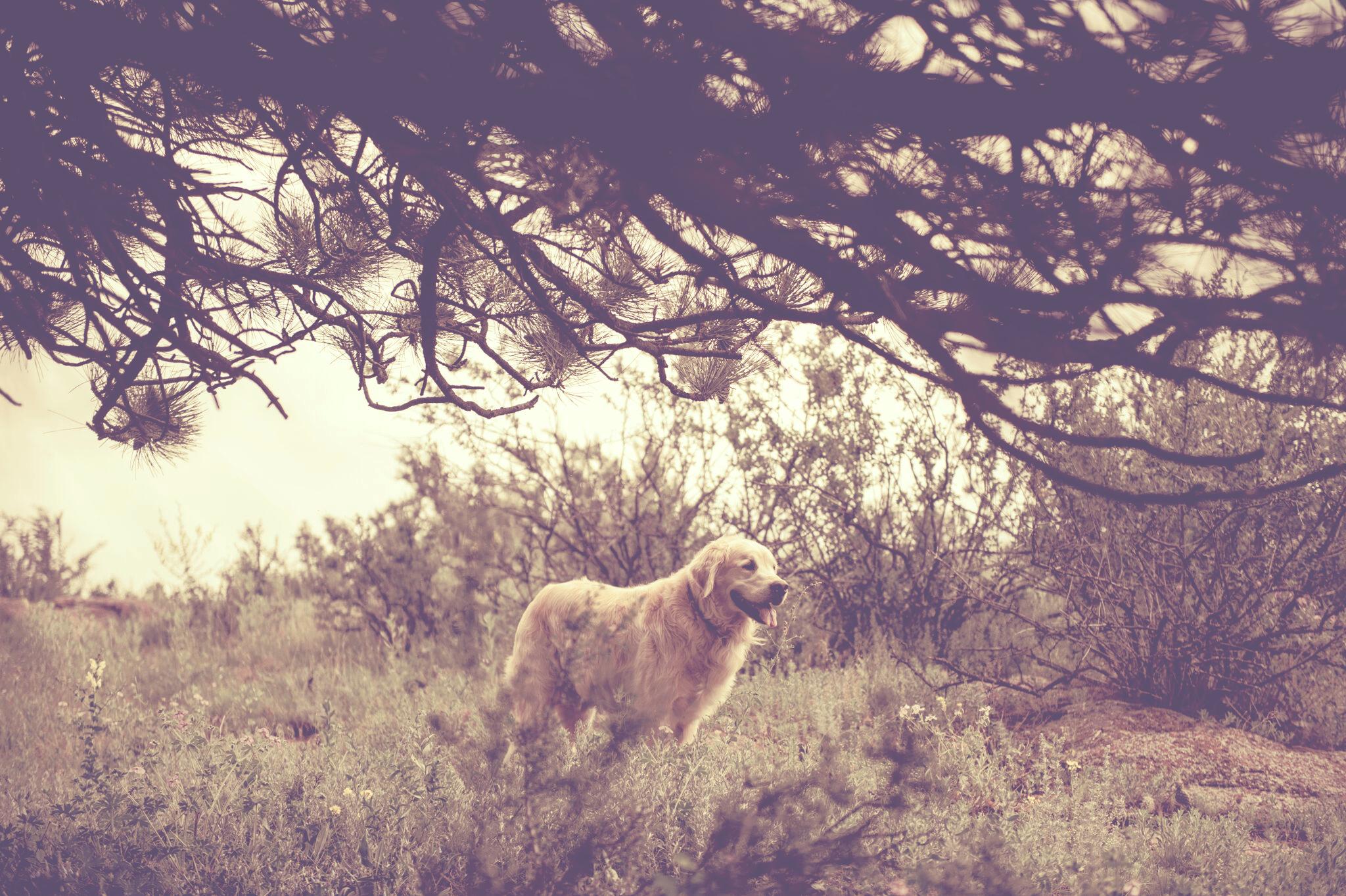 A Colorado Dog's Life – Finn
